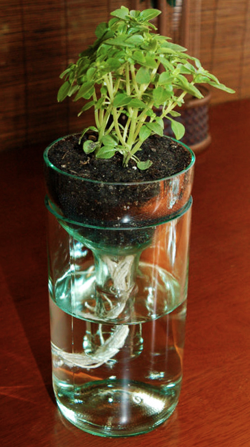 glass-bottle-DIY-planter-for-creative-home-decor